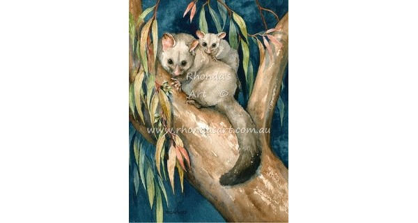Brushtail Possum 3