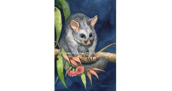 Rhonda's Art – Brushtail Possum 4