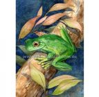 Rhonda's Art – Green Frog 2