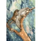 Rhonda's Art – Ringtail Possum 2