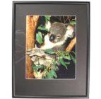 Australian Mallee Art – Australian Native Fauna Framed Print – Koala