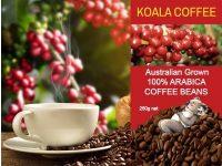 Koala Tea Company – Organic Coffee