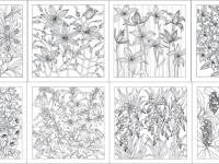 Lorraine Brownlee Designs – Wild Australia Native Plant Colouring Cards